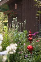 Red, ornamental balls and poppy seedheads in garden in front of old wooden shed