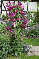 Heart on metal rod in front of purple clematis and zinc watering can in garden