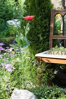 Flowering plants next to antique chair with succulents planted in seat in garden
