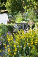 Yellow loosestrife, idyllic seating and washing line in flowering garden