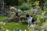 Dog sitting in flowering garden