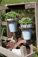 Plant pots hung on mesh panel and crate of rusty gardening utensils