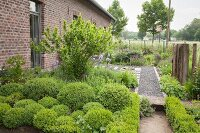 Clipped box bushes and gravel path in front garden of brick farmhouse