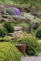 Aubrieta amongst other flowering plants in sloping rockery