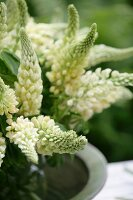 Bouquet of white lupins (close-up)