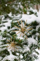 Two glittery, gold metal stars balanced on snowy fir branches