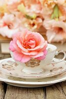 Rose in vintage teacup on saucer and plate and salmon-pink gladioli in background