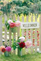 Dahlias in tin cans and welcome sign on garden fence