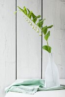 White-flowering Solomon's seal in bottle against wooden wall