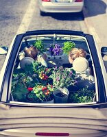 Urban gardening: young woman with foliage plants and vegetable plants in convertible car