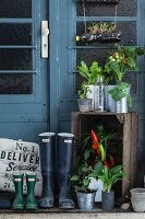 Platform in front of front door decorated with potted vegetable plants and herbs