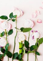 Flower stalks with marshmallow flowers decorating wall