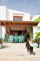 Turquoise peacock armchairs on Finca terrace with dog in foreground