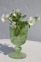 White violas in glass goblet