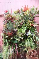Bromeliads and philodendrons planted in front of corrugated metal façade
