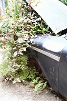 Plants planted under bonnet of vintage car