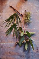 Sprigs from mountain ash, black pine and cyprus trees