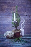 A mini Christmas tree in a pot decorated with a candle and Icelandic moss