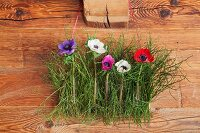 Anemones and bilberry stalks hung on wooden wall