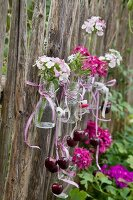 Sweet Williams in swing-top bottles mounted on paling fence