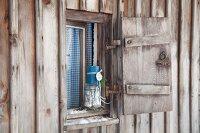 Advent arrangement on windowsill of rustic, weathered hut