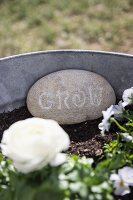 White lettering on pebble and white rose in galvanised metal planter
