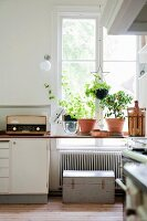 Potted plants on kitchen worksurface in front of window
