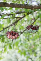 Two wire baskets hanging from branch