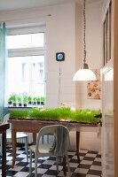 A dining table planted with grass with a pendant lamp hanging above it in a renovated period building apartment