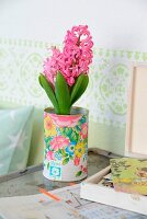 Pink hyacinth in tin decorated with floral pattern in shabby-chic ambiance with pastel green frieze on wall