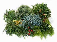 Various branches for making Advent wreath (fir, pine, holly, bay)