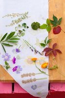 Various leaves and flowers to be used for printing fabric