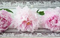 Peonies on vintage surface