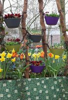 Screen made from brightly coloured tubs of spring flowers hung between wooden poles