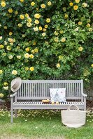Wooden bench in front of yellow-flowering rose bush on house façade in garden