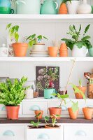 Vintage crockery, storage jars, terracotta pots and house plants arranged on white shelves