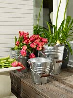 Tulips in one of three aluminium buckets of various sizes on wooden step