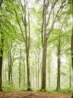 A light deciduous forest
