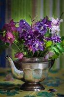 Bouquet of multicoloured aquilegia in silver teapot