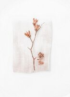 Branch of pale pink flowers on scrap of fabric