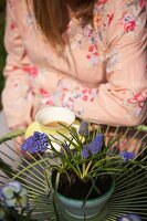 Woman sitting at garden table with cup of tea and grape hyacinths