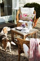 Coffee break in garden - dog sniffing at side table between wicker chairs with cushions