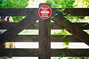 Australian Shepherd behind garden gate with warning sign in French