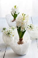 White hyacinths in wax bowls