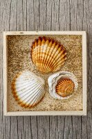 Seashells in wooden crate on weathered wooden board