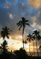 Palm trees silhouetted against evening sky on Tanzanian coast