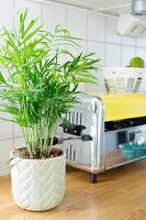 Small potted palm and retro toaster on wooden worksurface