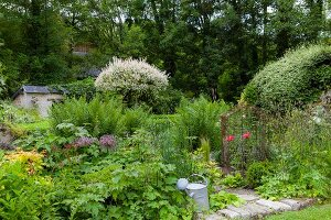 Shrubs and ferns in summery, densely planted garden