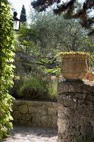 Path and terracotta pot on old stone wall next to corner of climber-covered house; Mediterranean planting in garden