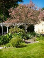 Flowering tree and white pergola in summery garden with stone-paved path